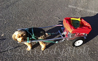CUSTOM DOG CARTS | Manufacturing and selling the finest dog carts for draft dog competition and recreation.