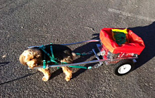 CUSTOM DOG CARTS | Manufacturing and selling the finest dog carts