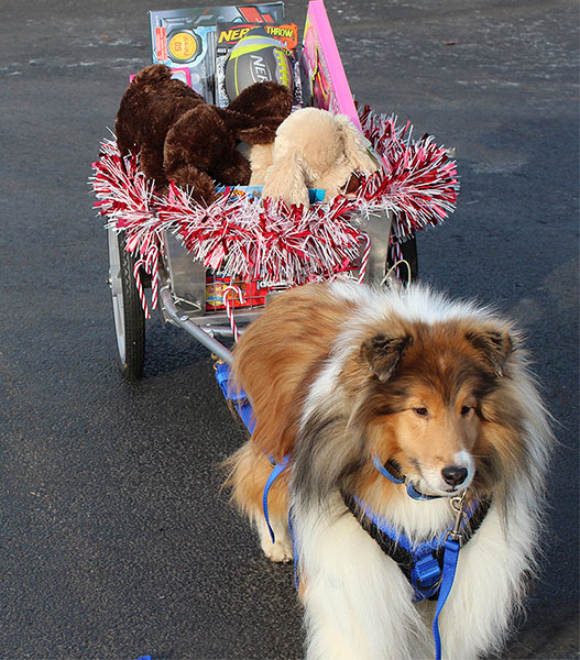 Gavyn loves to cart and his owner in Buffalo, N.Y.