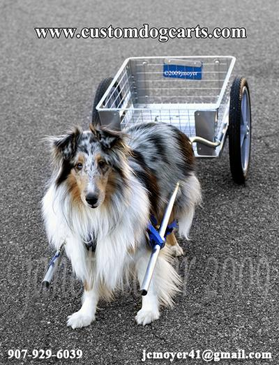 Custom Dog Carts.com