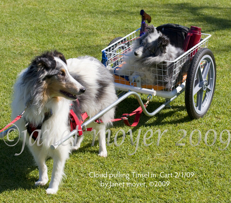 Cloud, pulling 17 year old Tinsel in his cart in Balboa Park, San Diego, Ca