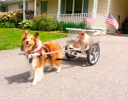 Cordell from Maryland helps out by