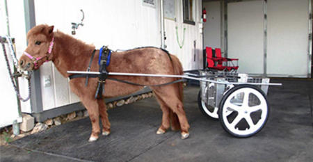 Developed larger cart for a mini-horse at a customer's special request.